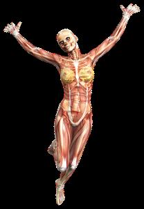 anatomy-2901129_960_720
