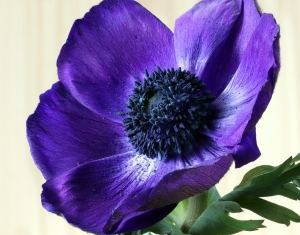 flowers-3935584_960_720
